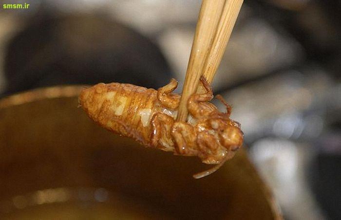 خوشمزه ترین غذاها از دید ژاپنی ها!