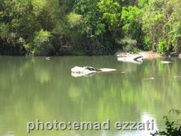 دریاچه داخل باغ پرندگان و تمساح در حال استراحت