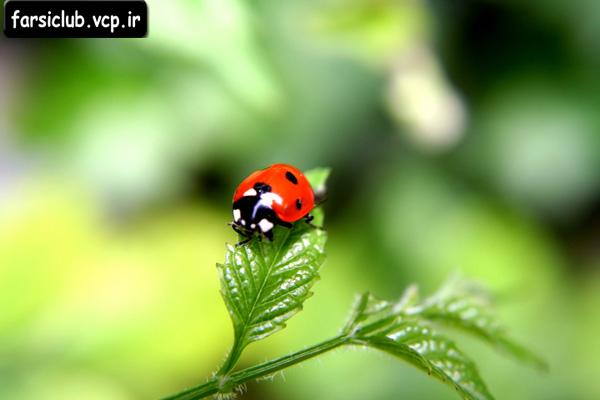 عکس  های دیدنی از حیات وحش