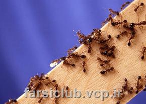 درسهای بزرگی که میتوان از مورچه ها آموخت{فار30کلاب/farsiclub.vcp.ir}