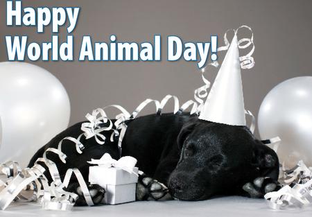 روز جهانی حیوانات مبارک