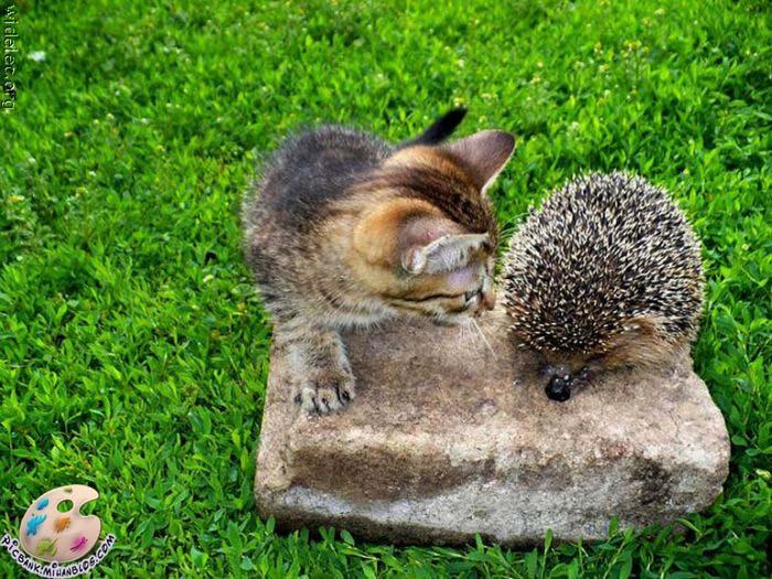 عکس | عکسهای زیبا | عکس های زیبا | عکسهای دیدنی | عکسهای بامزه | عکس بامزه | عکس با مزه | باکیفیت | عکسهای با کیفیت | عکسهای باکیفیت | با کیفیت | اسب | اسرار حیوانات | اهلی | تصاویر با کیفیت بالا | تصاویر خنده دار | تصاویر دیدنی | حیات وحش | حیوان زبان بسته | حیوانات | حیوانات اهلی | حیوانات سرکش | حیوانات وحشی | خنده | خنده بازار | خنده دار | دنیای حیوانات | دنیای حیوانات وحشی | شکارحیوانات | عکس های جالب| عکس های خفن | عکس های خنده دار | عکس های روز | غذای حیوانات | حیوان | لبخند | لطیفه | محل حیوانات | وحشی | کرکر خنده | کیفیت بالا | گالری خنده | گالری عکس خنده دار | گربه | سگ | موش | مرغ و خروس | تصاویر زیبا | تصاویر بامزه | تصاویر با مزه | تصویر | آرشیو عکس و تصویر | میمون |