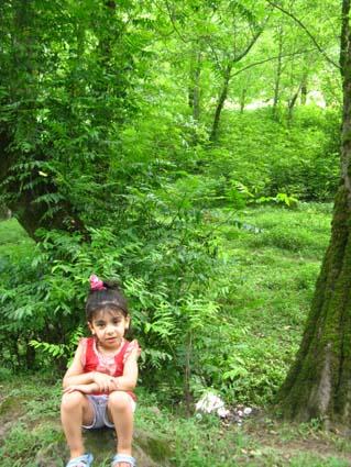 جنگل شمال