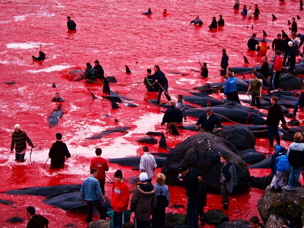 http://s2.picofile.com/file/7170106020/bloody_water_from_killing_whales.jpg