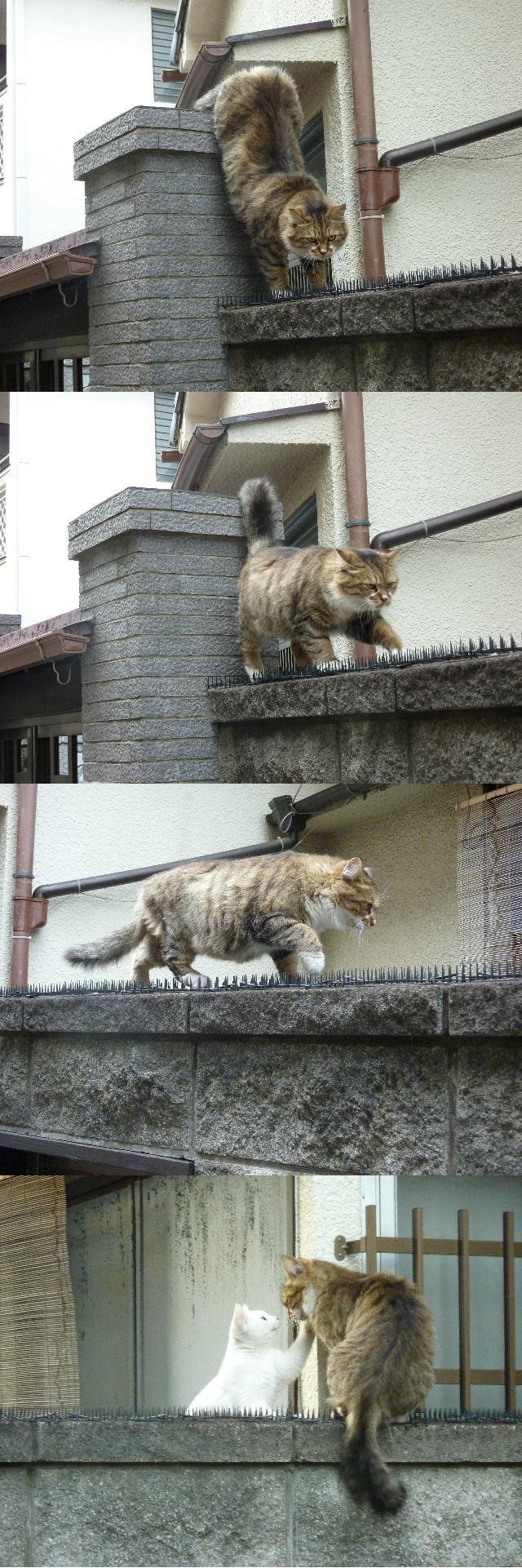 نوشته های جلال و گربه ای که می گوید: در ره منزل لیلی که خطرهاست در آن      شرط اول قدم آنست که مجنون باشی