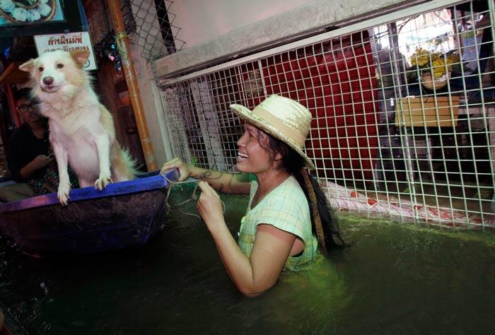 تایلند 2011