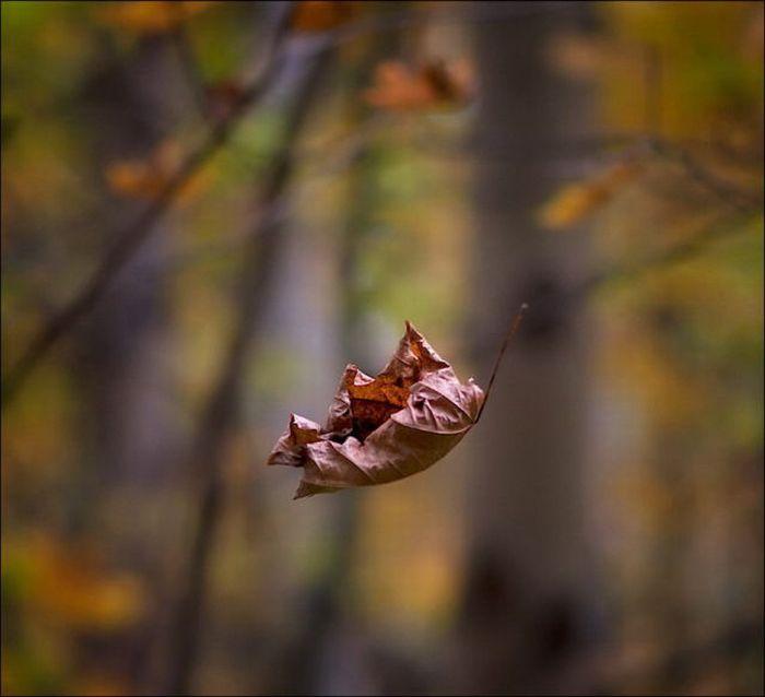 عکس+های+پاییز+غمگین