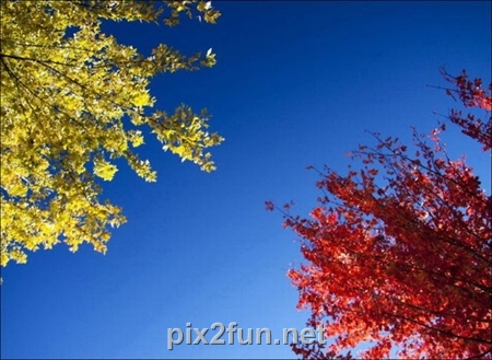 http://s2.picofile.com/file/7186088595/1320862272beautiful_fall_in_photos_01.jpg