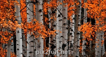 http://s2.picofile.com/file/7186089672/1320862272beautiful_fall_in_photos_11.jpg