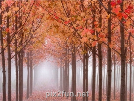 http://s2.picofile.com/file/7186095913/1320862272beautiful_fall_in_photos_29.jpg