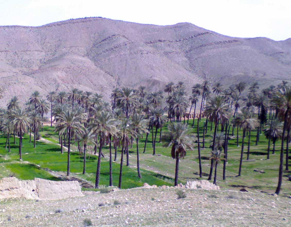 باغ حسن اباد