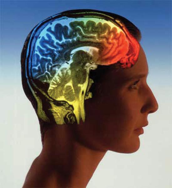 آیا مغز انسان جنسیت دارد؟