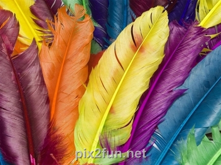 pix2fun net6f68e779399119c6d7bd3ed7267ec527 dfoiuij3qemkjs4lrov عکس های رنگارنگ از لحظه های زیبا