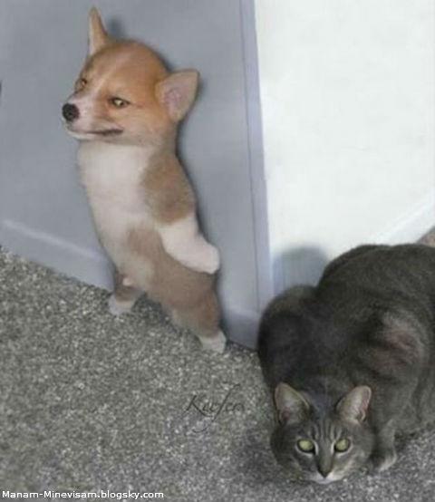 عکس جالب و خنده دار جدید