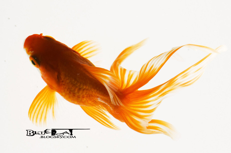 http://s2.picofile.com/file/7200302789/Animals_Under_water_Beautiful_fish_013225_.jpg