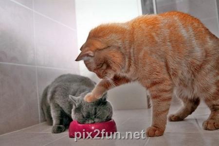 2aefafdfd2654907a685057fdf8edae2 عکس گربه های هنرمند