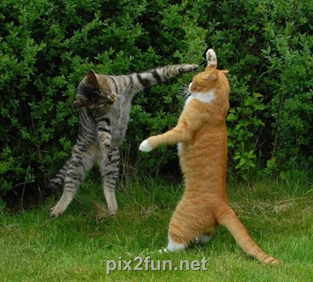 801ff29cf3ea01cb4f5c02eb27bd4171 عکس گربه های هنرمند