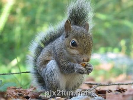5 عکسهایی جالب از انواع سنجاب
