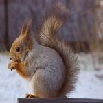 1 عکسهایی جالب از انواع سنجاب