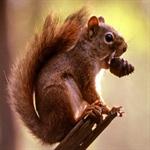 2 عکسهایی جالب از انواع سنجاب