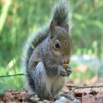 3 عکسهایی جالب از انواع سنجاب