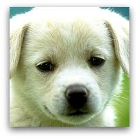 عکس های سگ   rojpix.com