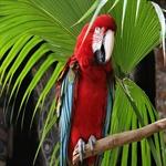 colorful gorgeous looks of parrot 11 طوطی های رنگارنگ و فوق العاده زیبا