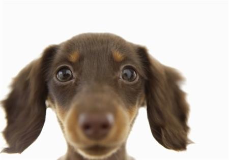 Dog9 3 عکس های دیدنی از سگ ها