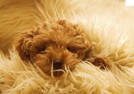 Dog9 8 عکس های دیدنی از سگ ها