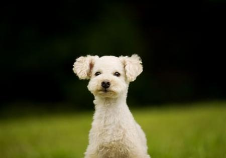 Dog9 19 عکس های دیدنی از سگ ها