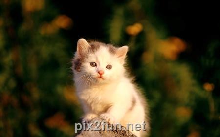 http://s2.picofile.com/file/7220824622/4.jpg