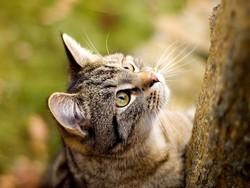 عکس گربه های ناز و زیبا (جدید)