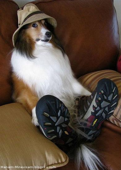 چرا سگ ها به گاز میگیرن انسان هارو؟