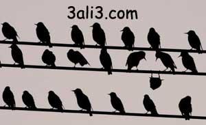 http://s2.picofile.com/file/7242021498/bimaram.jpg