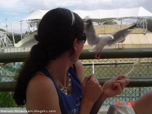 پرنده های دریایی