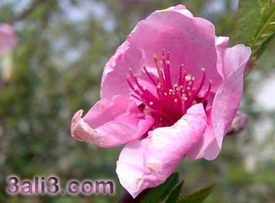 http://s2.picofile.com/file/7328445806/bahar.jpg