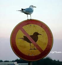 پیشداوری ممنوع