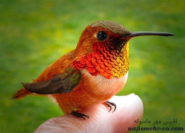 تصاویر پرندگان