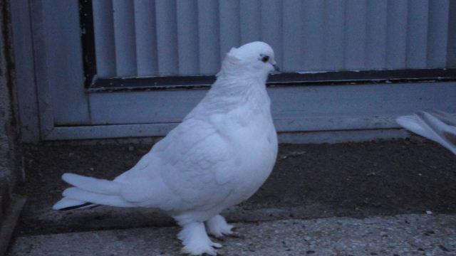 عکس یاکریم سفید