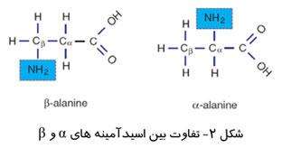 تفاوت بین اسیدآمینه های آلفا و بتا