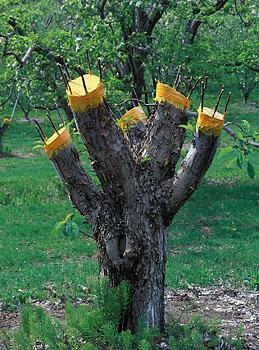 فیلم آموزشی تکنیکهای پیوند زنی - خرید پستی سی دی پیوند زنی درختان میوه - اطلاعات بیشتر  09191812812