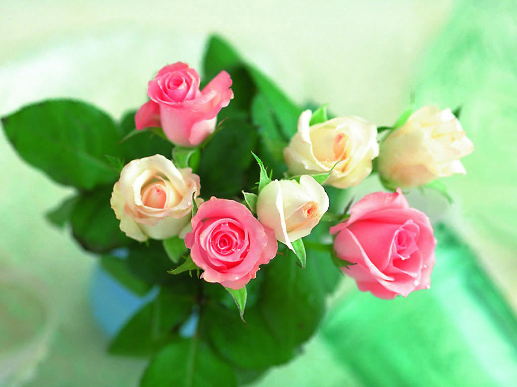 گل عید 92