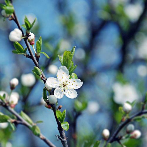 امسال پاییز یکسره سهم شما بهار