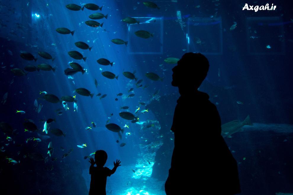 ab axgah ir5 عکس های زیبا از دنیای آب ها