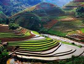 http://s2.picofile.com/file/7782961933/rice_terraces_31166_600x450.jpg