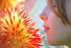 رایحه گل ها