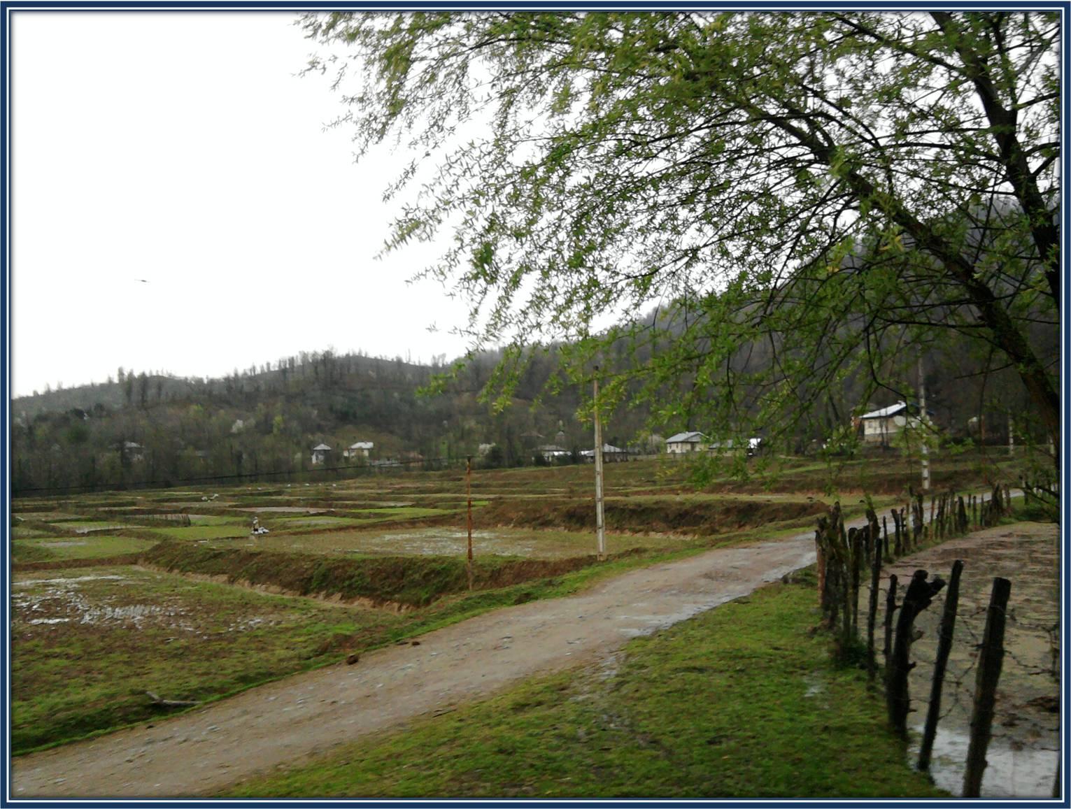 آخرین باران زمستونی روستای شولم