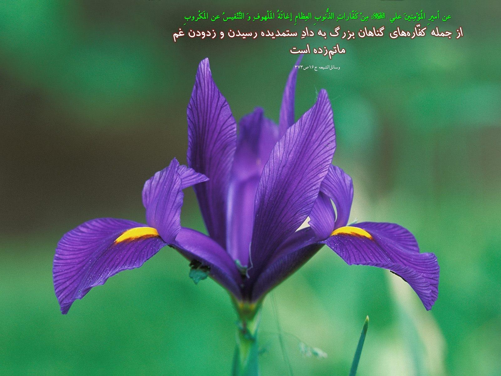 http://s2.picofile.com/file/7822438274/810_Hadis_259.jpg