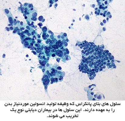 سلول های بتای پانکراس