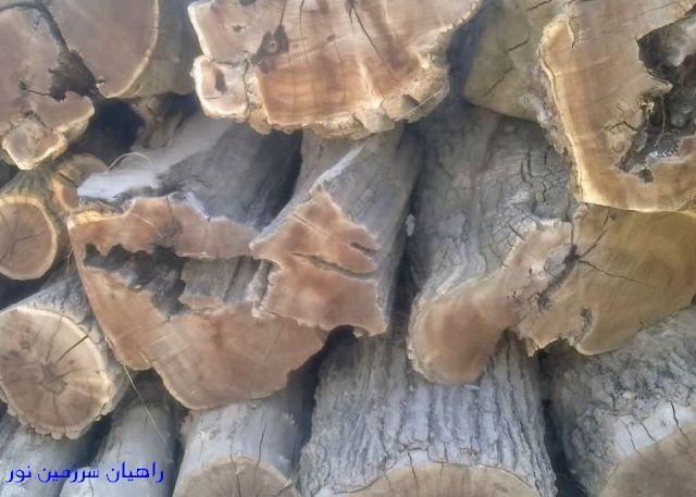 درختان خشکیده